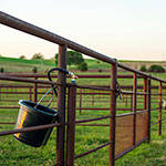 Buckets and Gates of the Grass Day Pastures